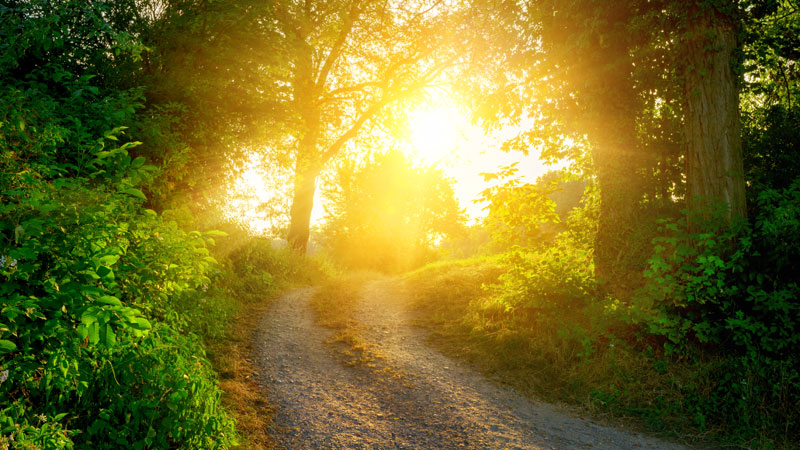 sunlight-in-the-woods