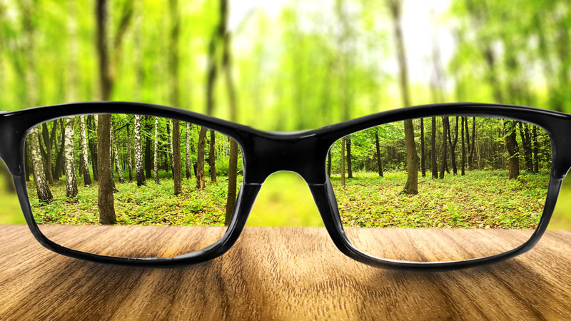 Clear-view-of-the-forest-thought-glasses