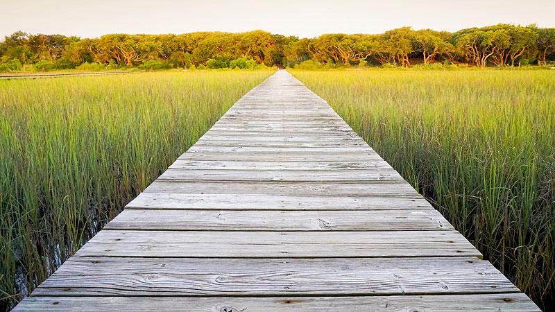 Wooden-walkway-in-the-field